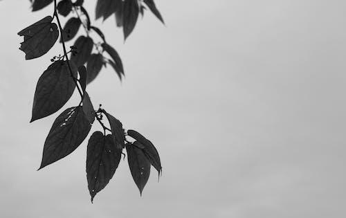 Darmowe zdjęcie z galerii z drzewo, gałąź drzewa, piękno, piękny