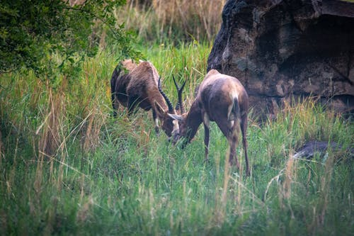 Brown Deers on Green Grass Field