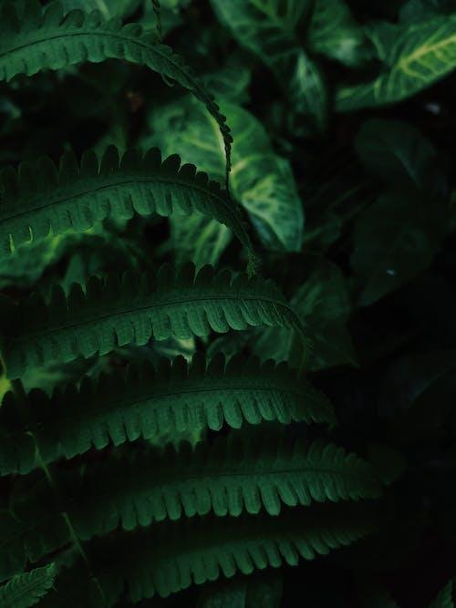 Ilmainen kuvapankkikuva tunnisteilla abstrakti, biologia, kasvikunta, kasvu