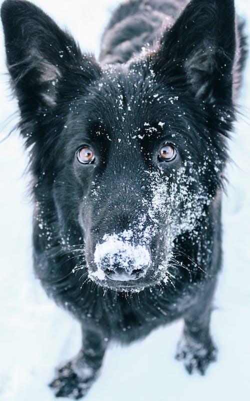 Black Long Coated Dog on Snow