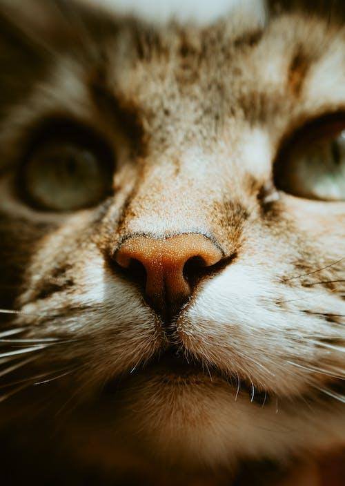 Brown Tabby Cat With Orange Eyes
