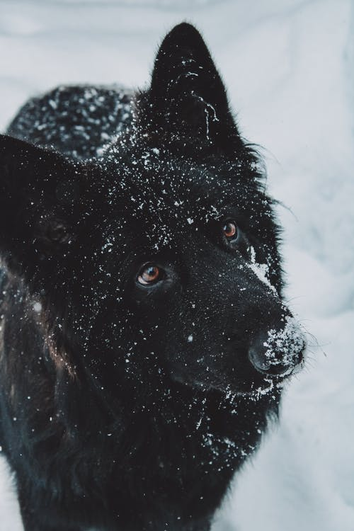 Black Long Coated Dog on Snow Covered Ground