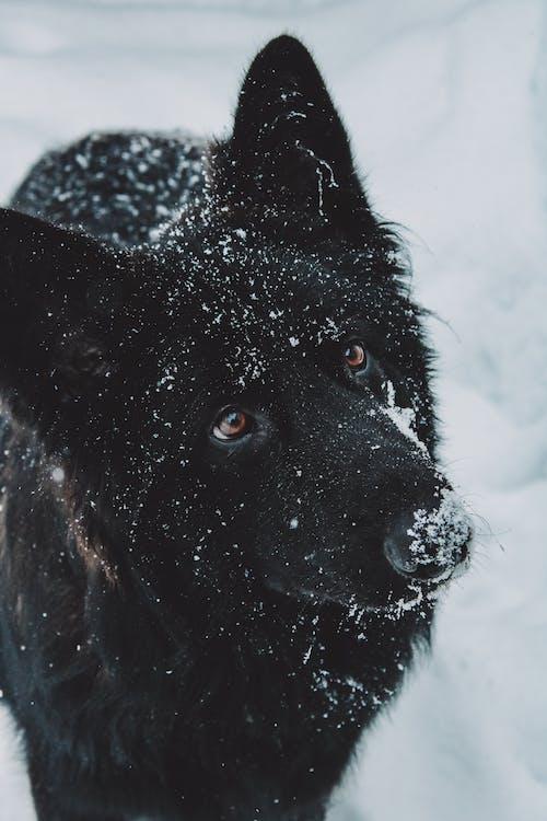 Fotos de stock gratuitas de al aire libre, amante de los animales, animal, canino