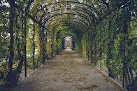 garden, path, way