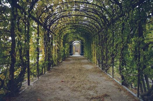 Free stock photo of garden, path, way, tunnel