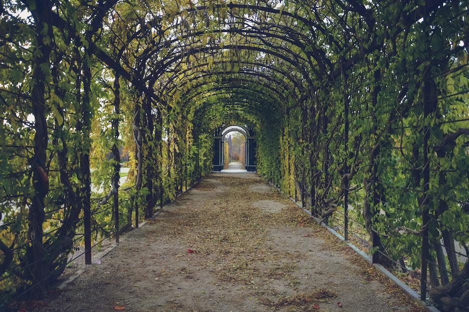 bindweed, corridor, garden
