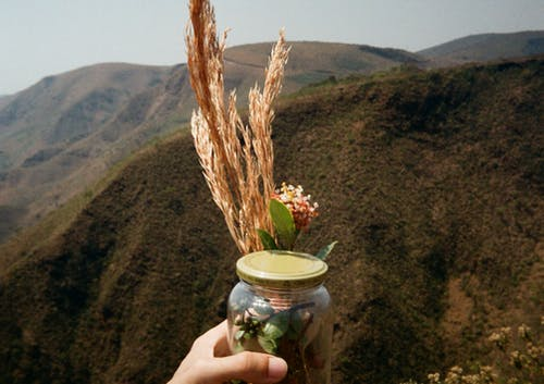 Person Holding Clear Glass Jar With Brown Wheat
