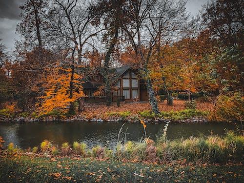 Foto profissional grátis de atmosfera de outono, casa, casa da floresta