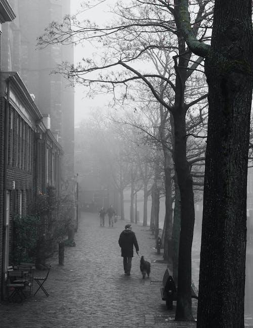 Ilmainen kuvapankkikuva tunnisteilla aamu, aamunkoitto, hollanti, ihmiset