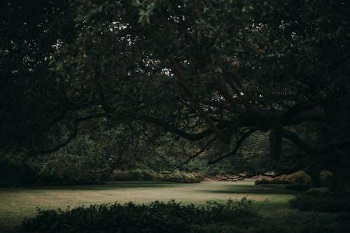 Free stock photo of backlit, botanic garden, dark, dawn