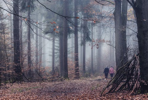 Person in Black Jacket Walking on Brown Dried Leaves on Forest