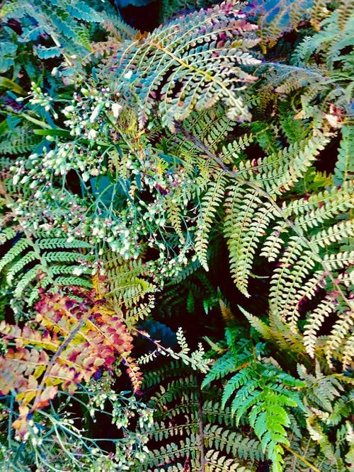 Free stock photo of bush, fern leaf, ferns, leaves