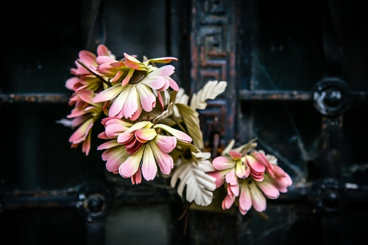 Free stock photo of flowers, blur, rustic, decoration