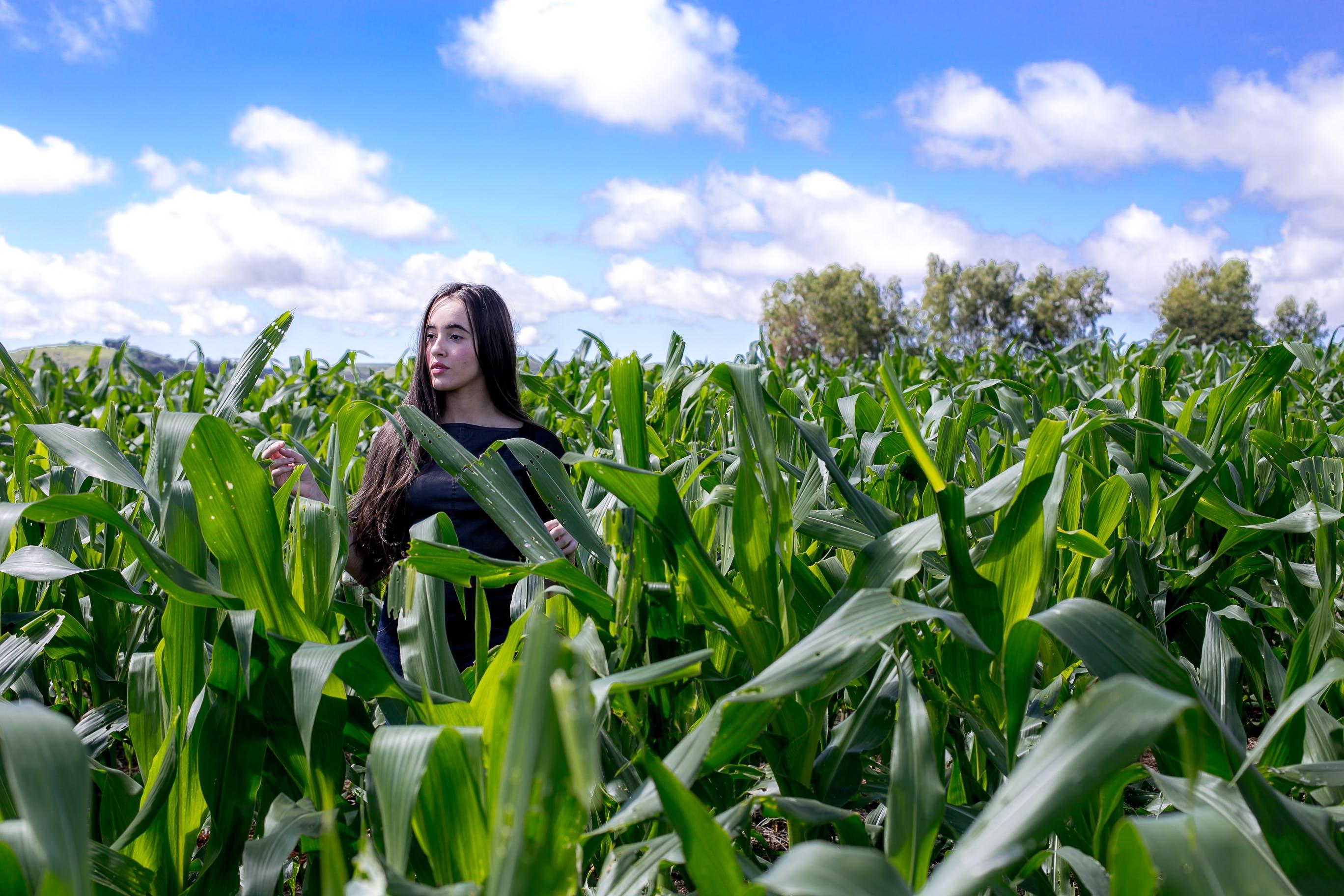 Woman Walking on Corn Field