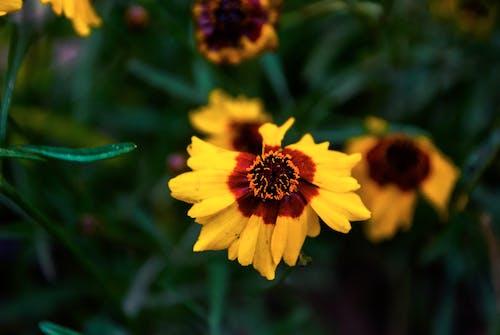 Základová fotografie zdarma na téma květiny