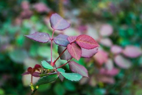 Základová fotografie zdarma na téma zahrada