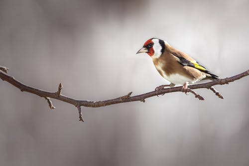 Yellow Black and White Bird on Brown Tree Branch
