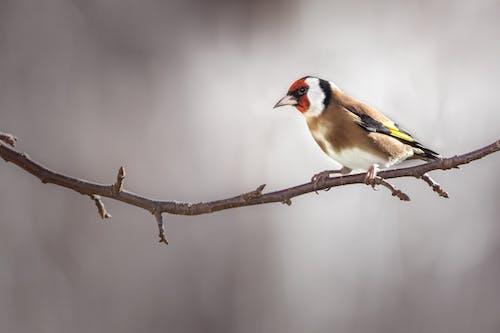 Immagine gratuita di albero, animale, becco di uccello