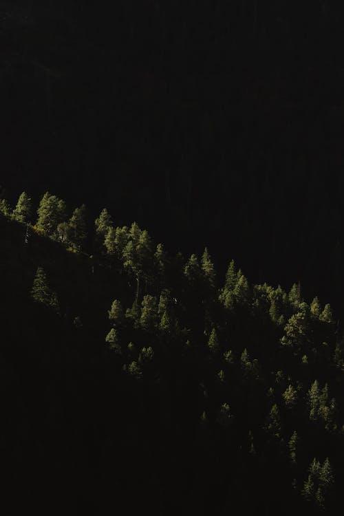 Kostnadsfri bild av kväll, mörk, nattid