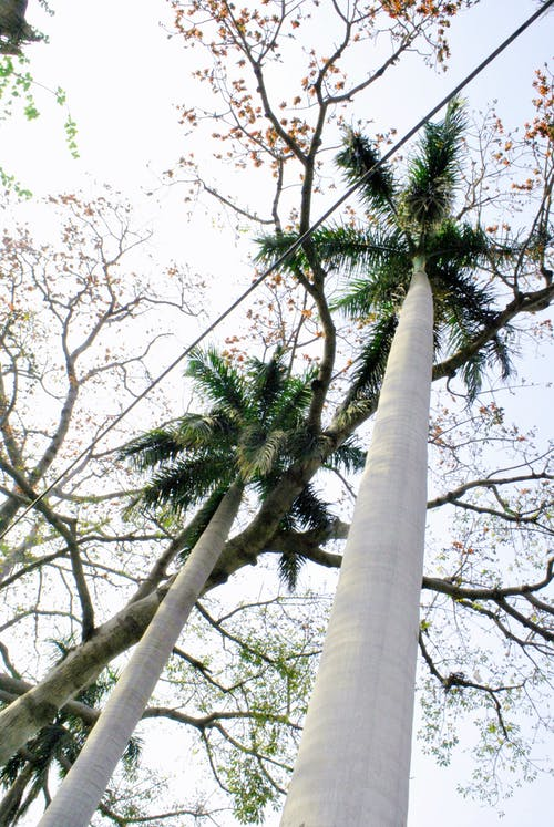 Základová fotografie zdarma na téma stromy