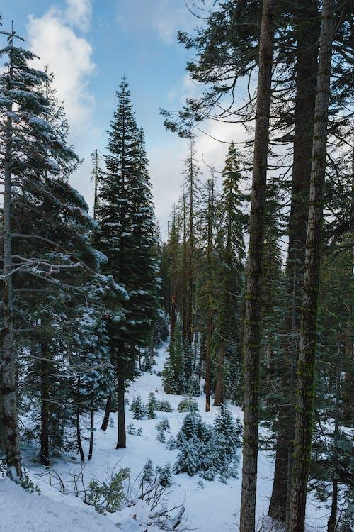 Бесплатное стоковое фото с HD-обои, instagram, вечнозеленый, гора