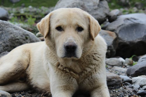 คลังภาพถ่ายฟรี ของ สุนัขกู้ภัย
