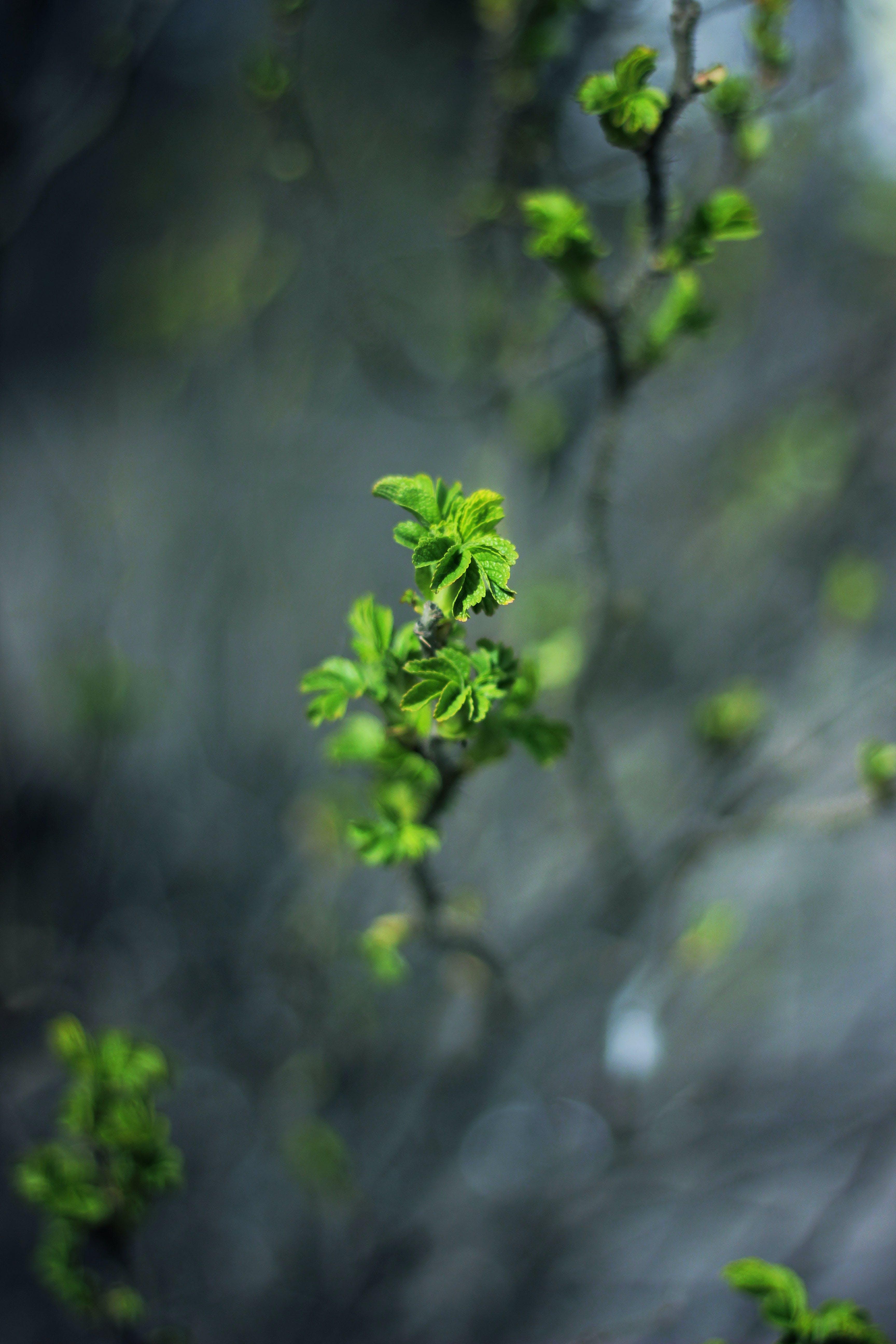 Kostenloses Stock Foto zu natur, pflanze, blätter, grün