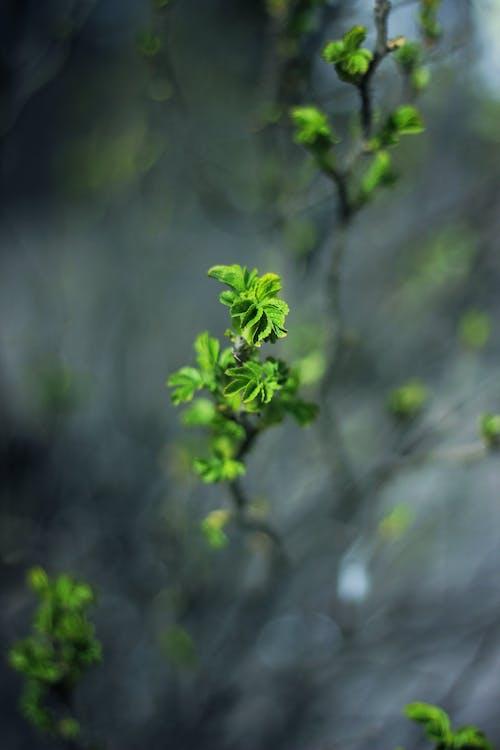 bitki, büyüme, doğa, ot içeren Ücretsiz stok fotoğraf