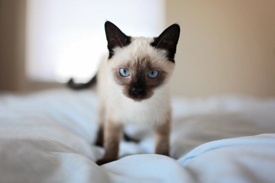 adorable, animal, bed
