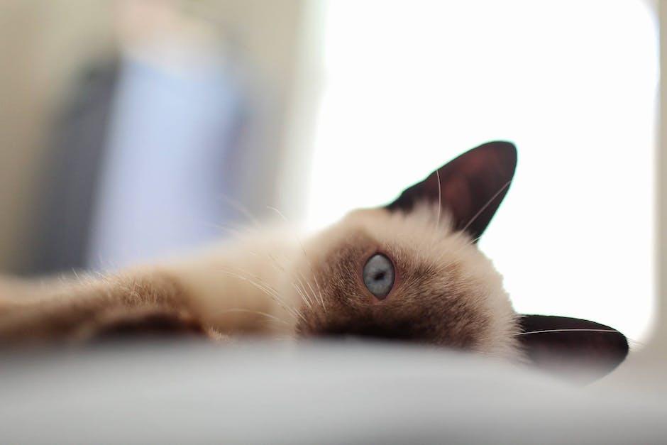 Adorable animal animal photography bed
