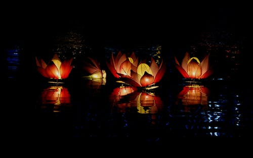 Foto stok gratis Agama Buddha, bayangan, cahaya, festival