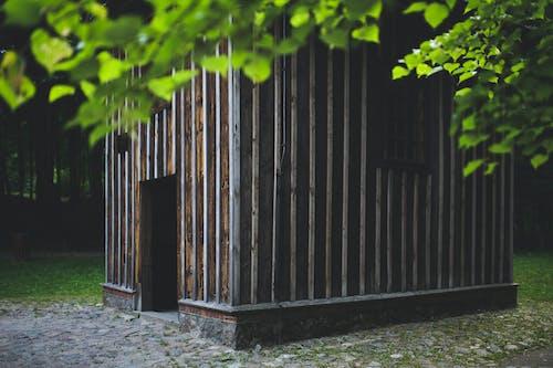 Kostnadsfri bild av blad, brunaktig, byggnad, ensam
