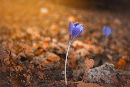 Gratis lagerfoto af blomst, natur, refleksioner, solnedgang