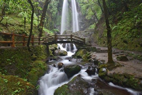 Безкоштовне стокове фото на тему «Водоспад, водоспади, каскад, потік»
