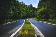 road, forest, trees