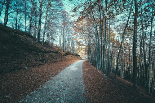 Long narrow pathway between tall bare trees growing on ground covered with fallen leaves in autumn park