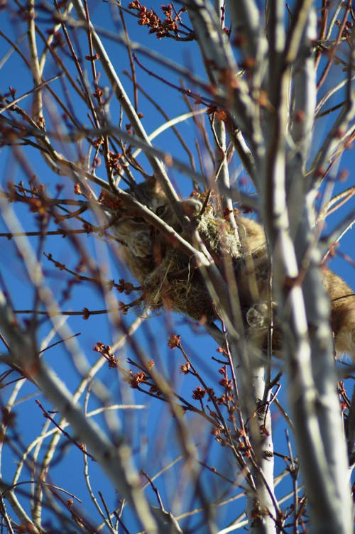 Free stock photo of Cat in a tree on a bird's nest