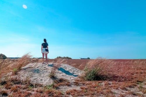Δωρεάν στοκ φωτογραφιών με αγρόκτημα, αεράκι, αμμόλοφος, ανεμώδης