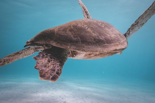 Turtle floating in blue sea