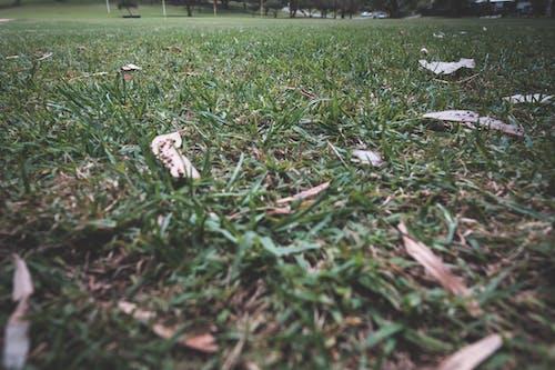 Hierba Verde Que Crece En Césped En El Parque