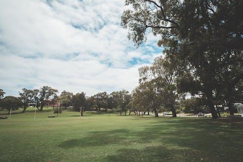在公園的草坪上生長的綠樹