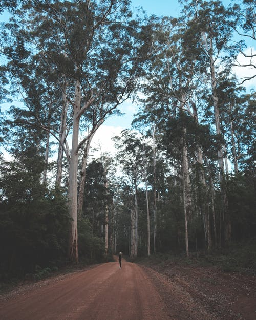 Faceless person standing in middle of rural roadway surrounded by tall trees in forest