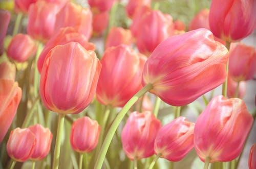 Gratis arkivbilde med blomst, blomstret, botanisk, hage