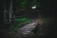 wood, nature, dark