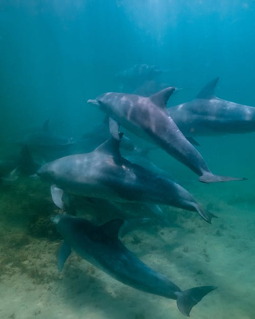 Bunch of wild dolphins floating underwater in deep blue sea with sun glares near sandy bottom with vegetation in tropical country