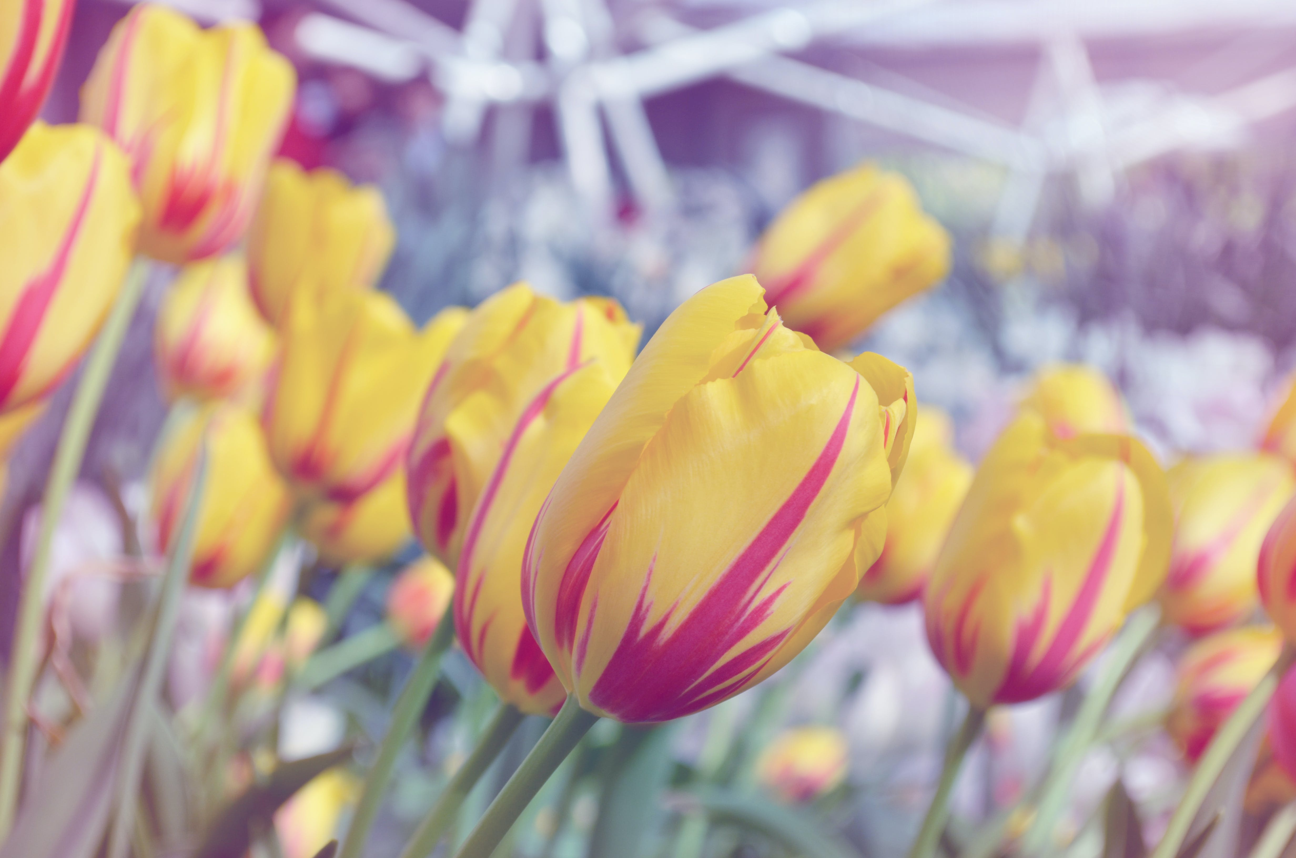Yellow and Pink Petaled Flowers