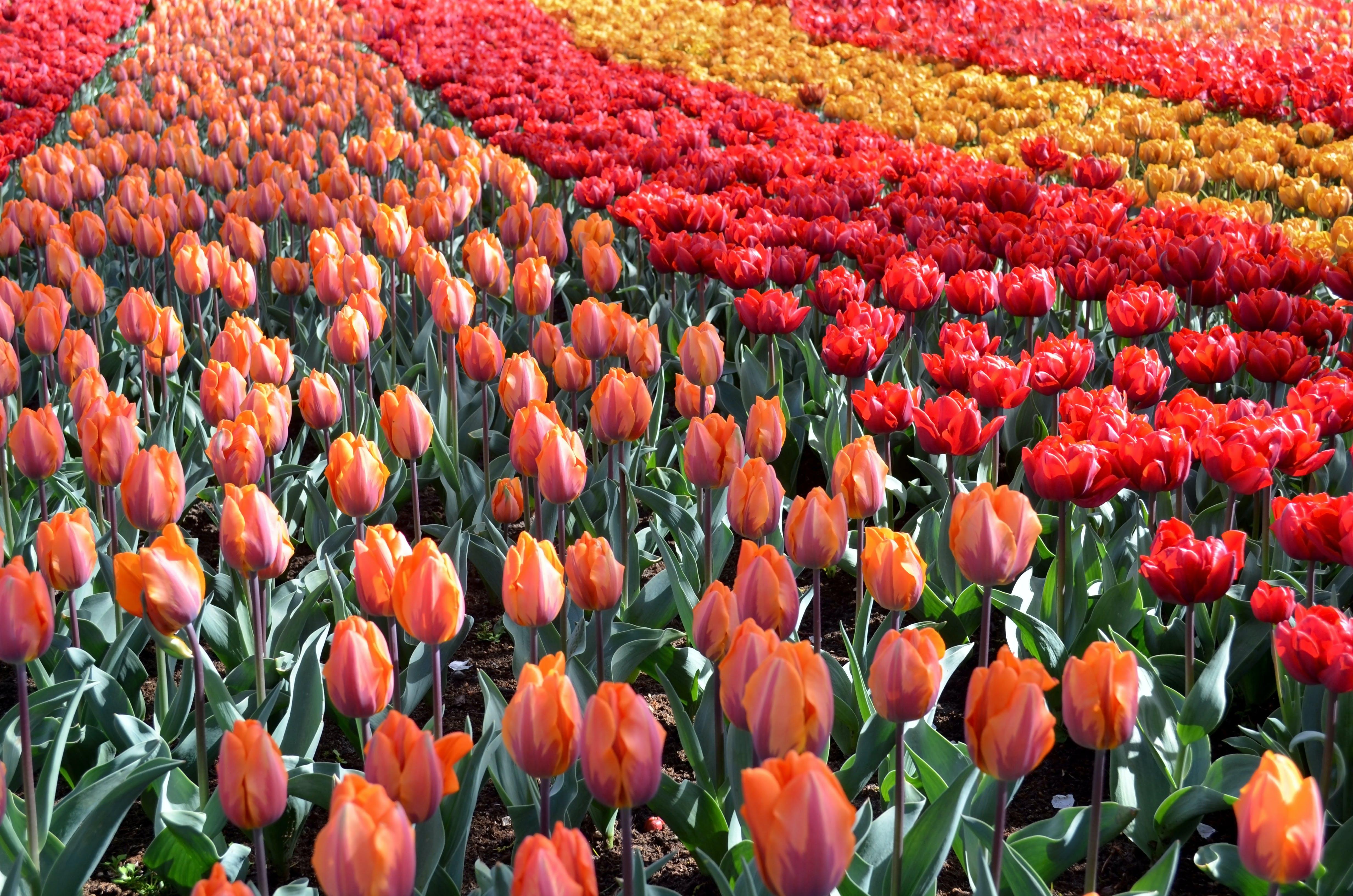 Kostenloses Stock Foto zu blume, botanischen, garten, niederlande