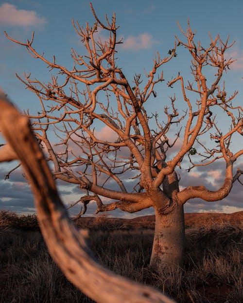 Cabang Kering Di Pohon Di Lapangan