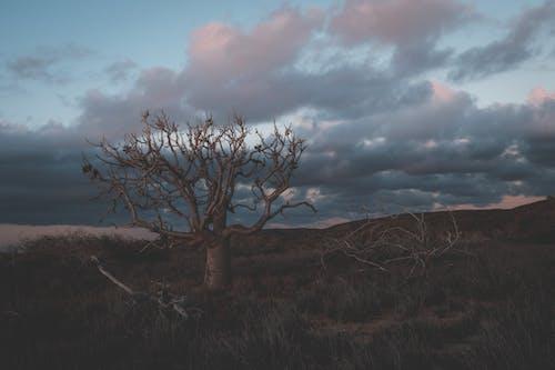 Pohon Tak Berdaun Tumbuh Di Ladang