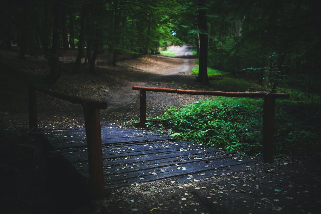 arbres, bosc, Camí